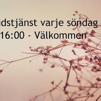 Göteborg Vineyard 381