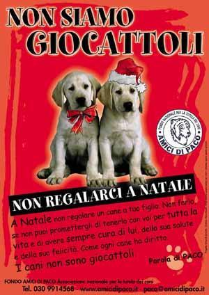 foto di cani labrador con cazzo in erezione commercial