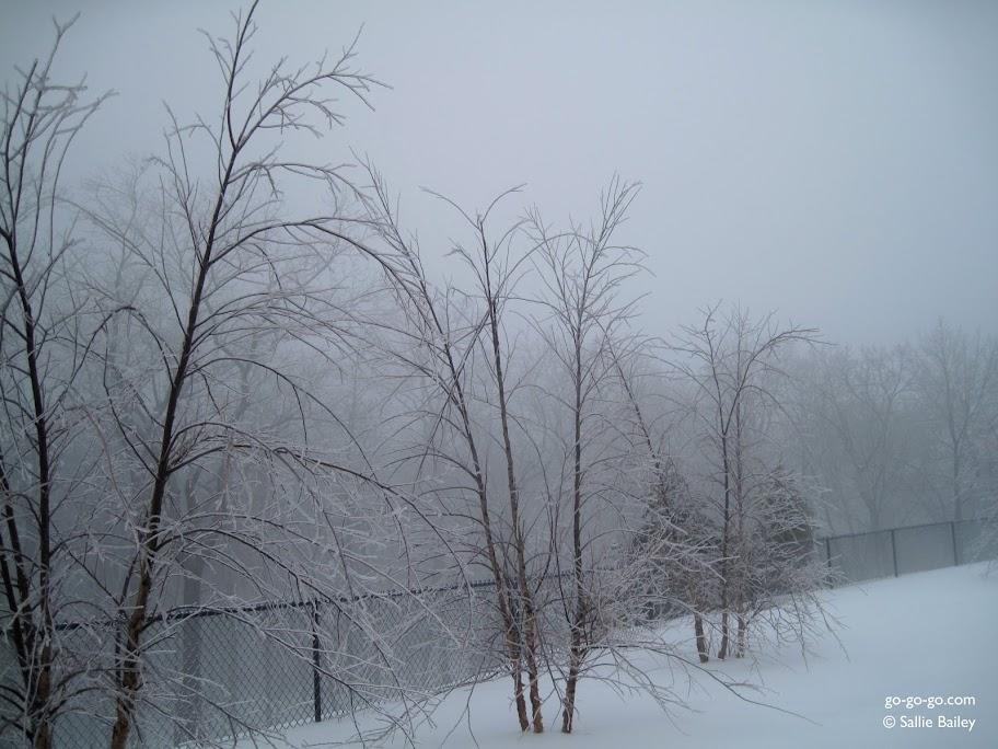 Everyday Photo: Birches