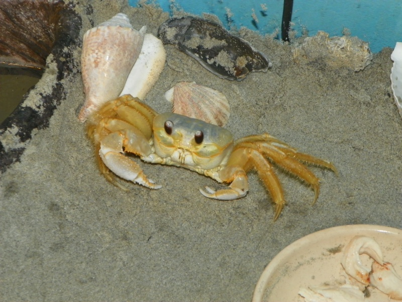 Pinchey, my sand crab 102_0217