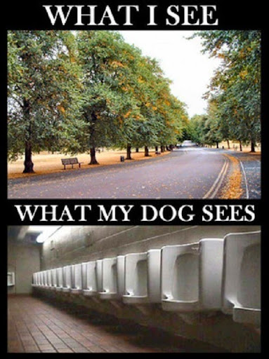 dog-4-2014-07-26-20-16.jpg