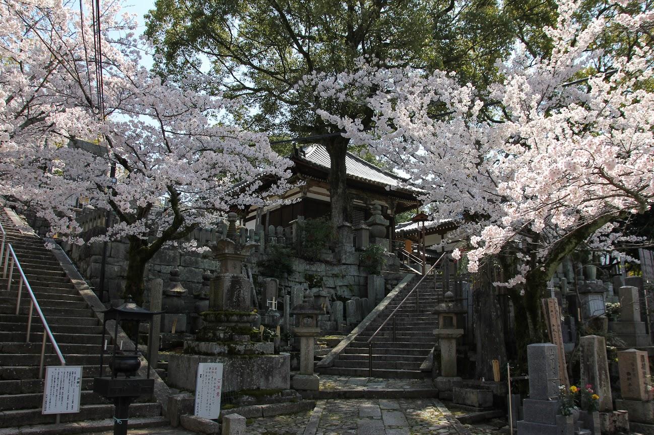 ber die japanische kirschbl te sakura und hanami japan. Black Bedroom Furniture Sets. Home Design Ideas