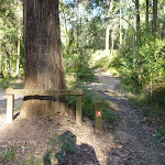 Meeting an unsealed trail on Walkers Ridge Road (365258)