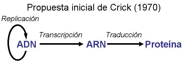 Dogma central de la biología molecular inicial