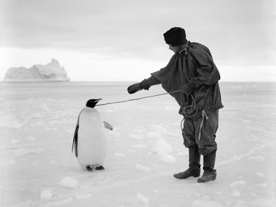 Thomas Clissold leads an Emperor penguin by a rope in the Ross Dependency, during Captain Robert Falcon Scott's Terra Nova Expedition to the Antarctic, 1st April 1911. Clissold was the expedition cook. (Photo by Herbert Ponting/Scott Polar Research Institute, University of Cambridge/Getty Images)