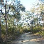 Perimeter Trail near Terrey Hills (307643)
