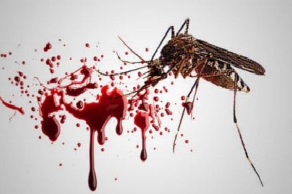 DBD (Demam Berdarah Dengue). Kotabumi Lampung Utara