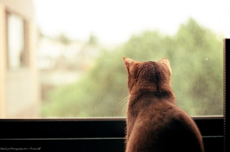 貓咪與窗的寫真 (底片)
