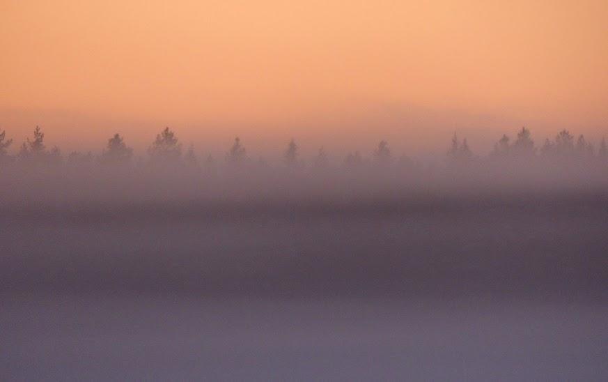niiles+brume+arbres+horizon+092.JPG