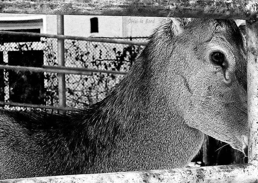 caprioara zoo piatra neamt