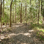 Track in Green Point Reserve by the shores of Lake Macquarie (403702)
