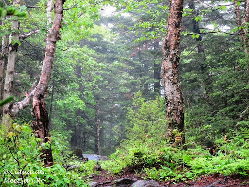 Tura la munte in Canada. Mont Orford.  ploua, ne ploua, dar nu pentru multa vreme