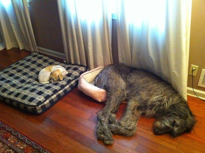 Tamanho não é documento nem no mundo cão.