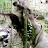 Mansour Alkatheri avatar image