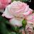 AMRITA SHARMA avatar image