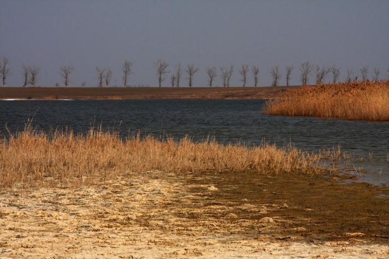 Ialomita balta pasari habitat