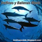 Delfines y Ballenas 60min