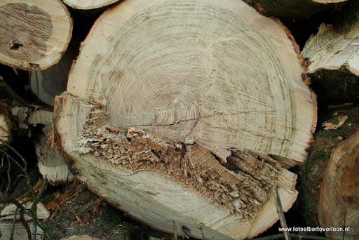 Houtoogst in de bossen van overloon 17-01-2012 (21).JPG