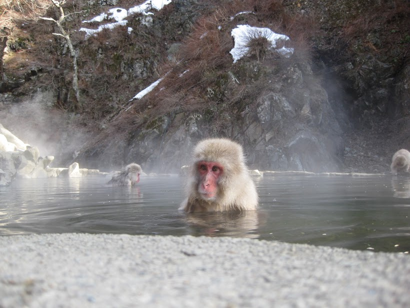 Monkey peeking out of the hot pool