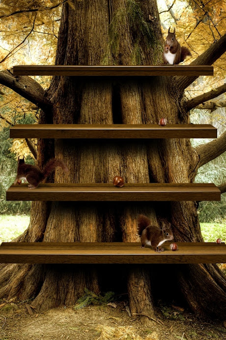 iPhone4 Backgrounds Squirrel Shelves Graphic Wallpapers