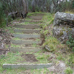 Timber steps on edge of gully (295910)