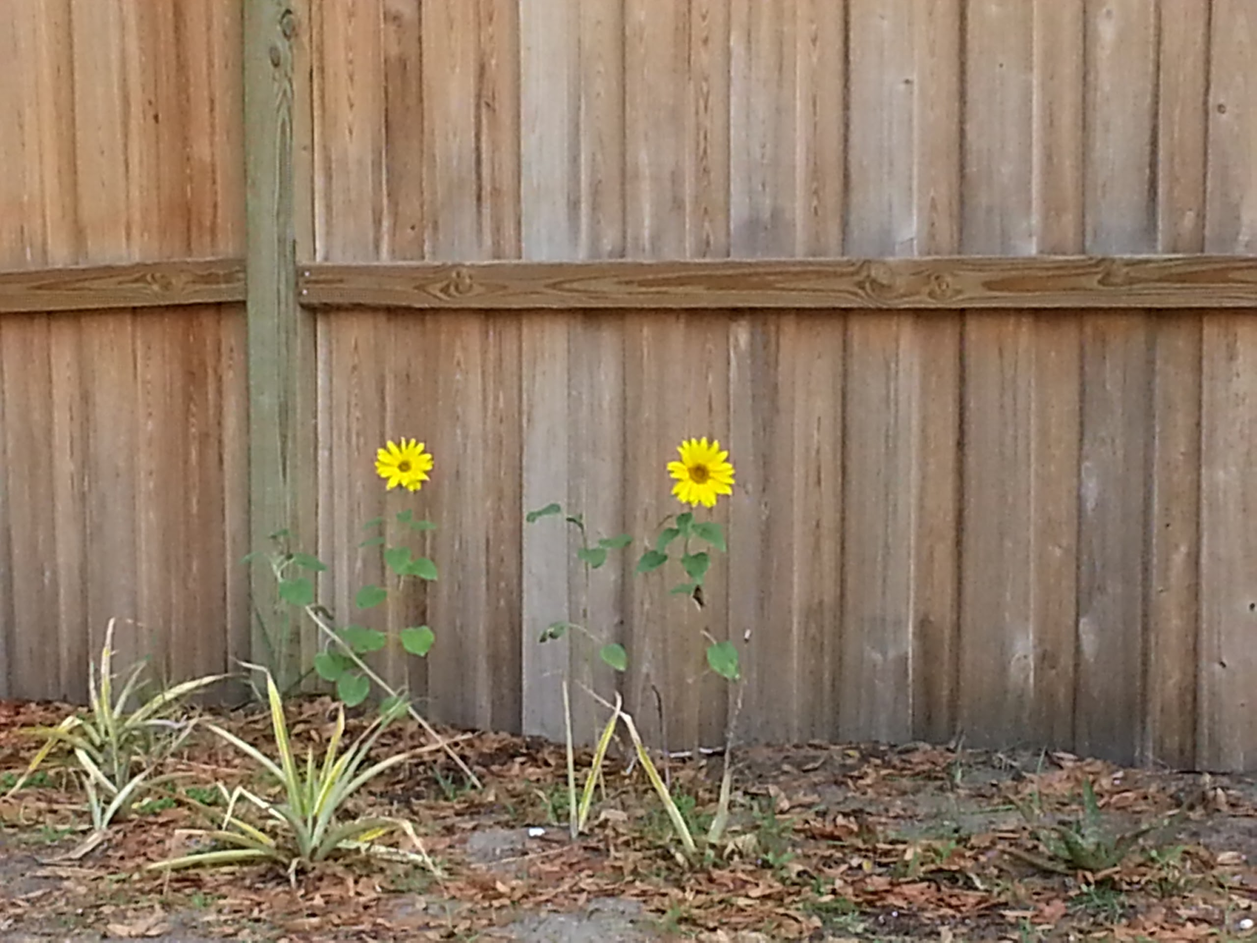 My garden and Aerogardens: March 2013