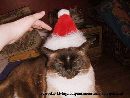 photo of Koko wearing a Christmas hat