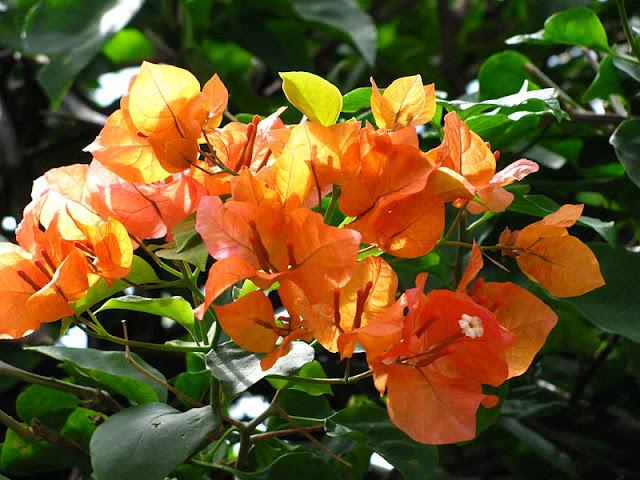 Из зимы в лето. Филиппины 2011 - Страница 5 IMG_0051