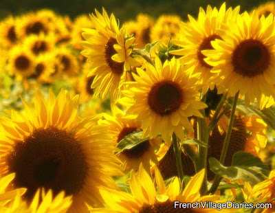 Much Love Monday Sunflowers Yellow Tour de France French Village Diaries