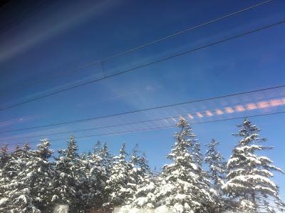 雪をかぶった木々と青空