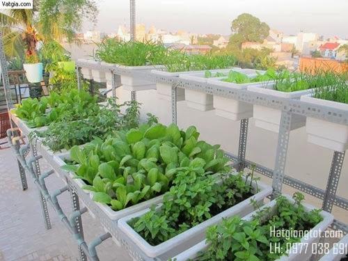 Hướng dẫn trồng rau tại nhà