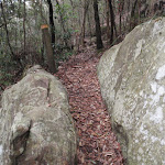 Cleft in rock (225556)
