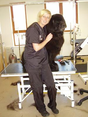 Mobile Dog Grooming Bexleyheath