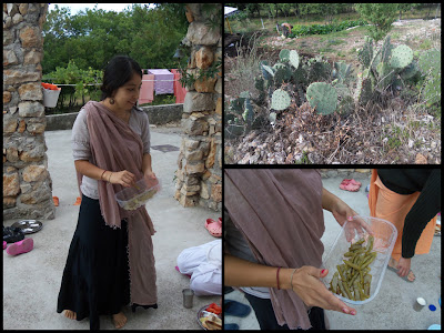 Anamsa dd of Mexico cooks prickly pear cactus for breakfast.
