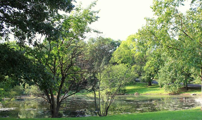 Summer on Allison Pond Park, Staten Island
