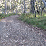 Road down to Manning River camping area