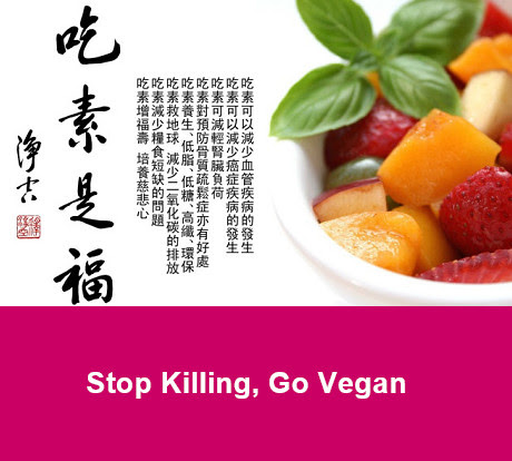 stop killing go vegan