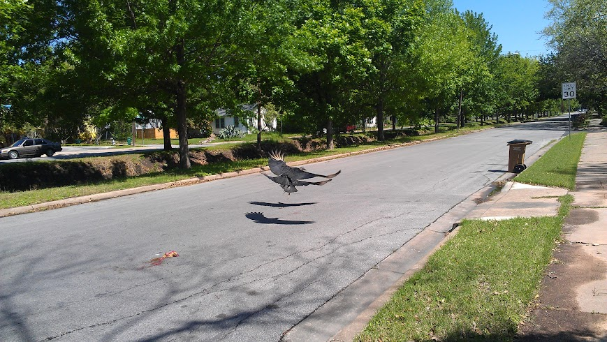 Vultures in the road