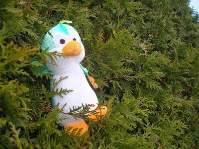 kleiner Pinguin in Gosen unterwegs