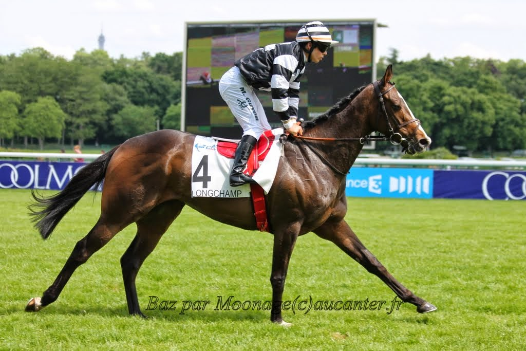 Photos Longchamp 25-05-2014 IMG_1186