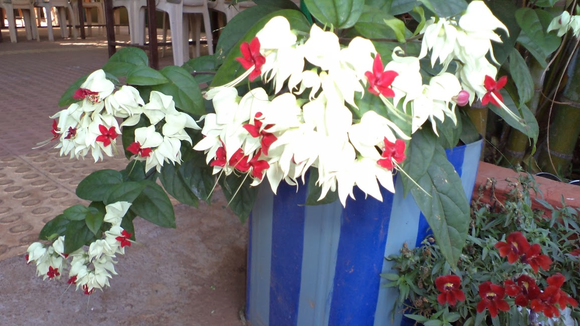 Flowers at Resort in Panchgani - Mahabaleshwar