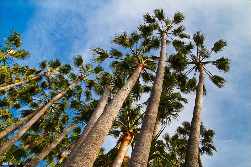 http://lh5.googleusercontent.com/-5UO4ePaqO9w/UN9aBQQ0BRI/AAAAAAAAEIw/U4L4pCkmdf4/s800/20121219-160601_Tenerife_Loro_Parque.jpg