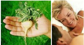 Maca plants medicinal