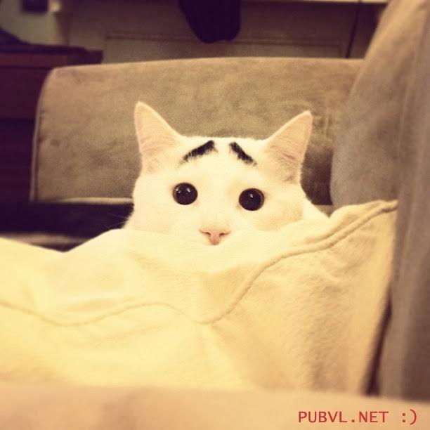 Độc đáo với những hình ảnh ngộ nghĩnh của những chú mèo