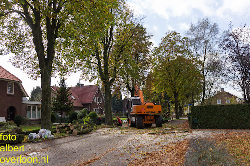 Bomen gekapt Museumlaan in overloon 20-10-2014 (27).jpg