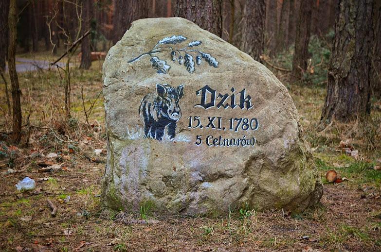 Lasy Rudzkie - Dzik 5 Centarów
