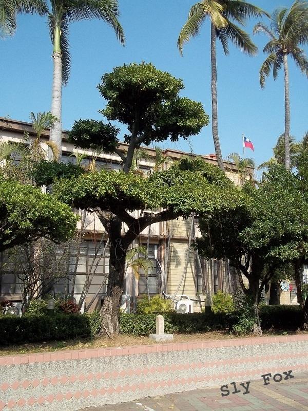 臺南市寶公學校卒業紀念榕樹