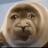Payton Allen avatar image