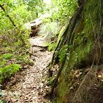 Barniers Road Trail (359978)