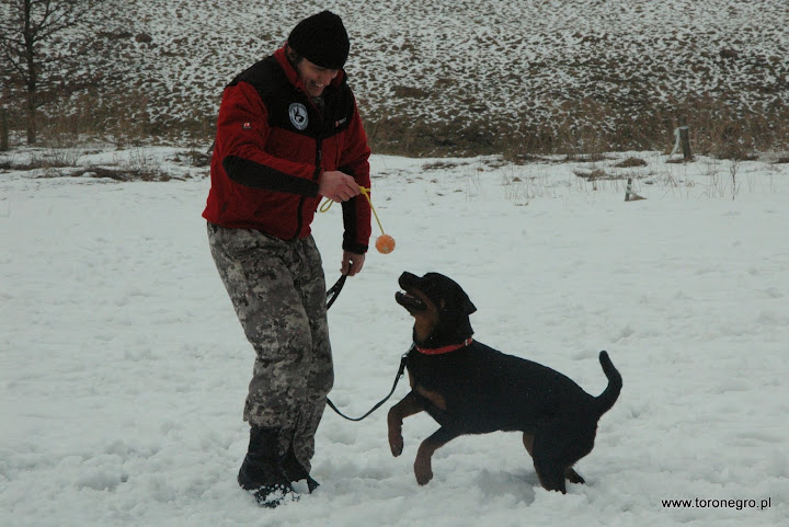 pies obonny uczy się gryźć